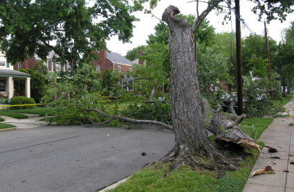 This tree came down in the storms of 10 Jun 2008